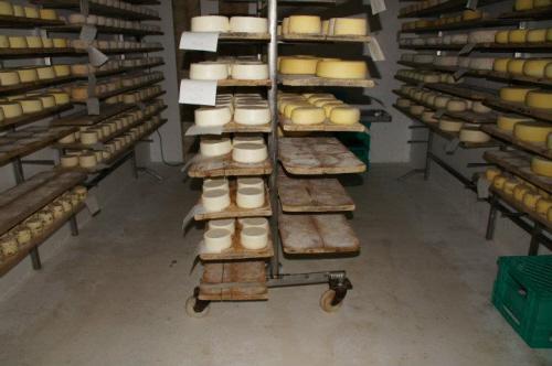 Cheese, Tuscany, Italy