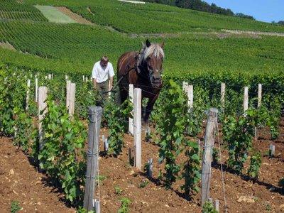 Burgundy , France