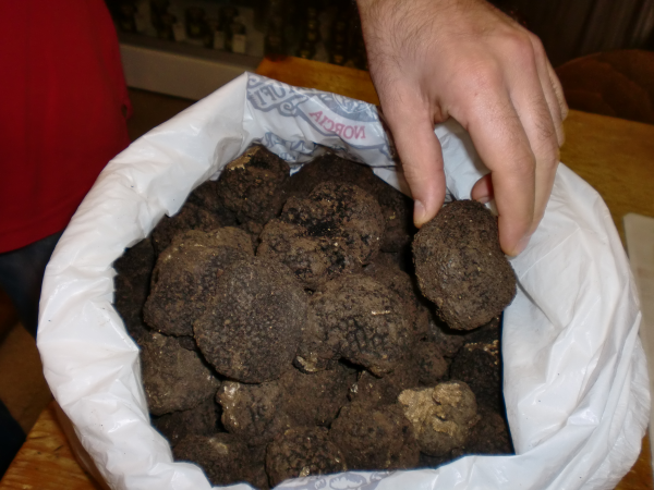 Black truffle- Food tour Italy