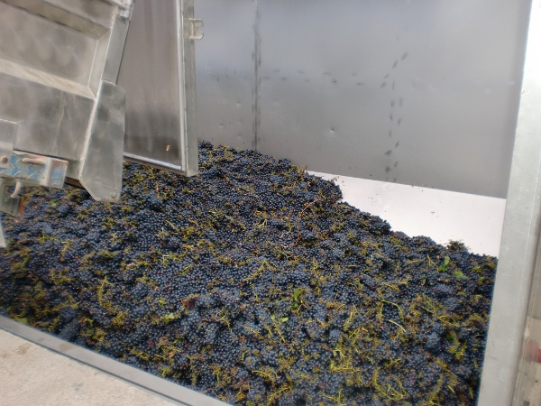 Catching the winery on a harvest
