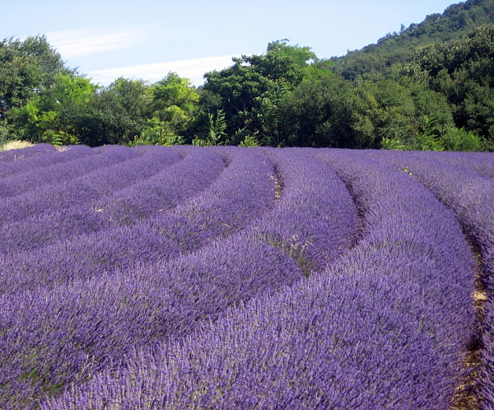 The 10 best places to visit in Provence