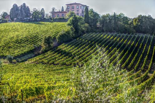 Tuscany wine tours Guide