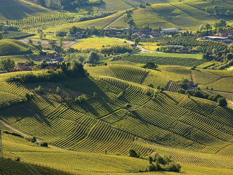 piedmont-wine-tour.jpg