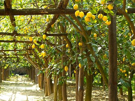 lemon farm - Dreamin amalfi.jpg