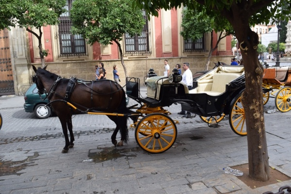 Andalucia-seville.jpg